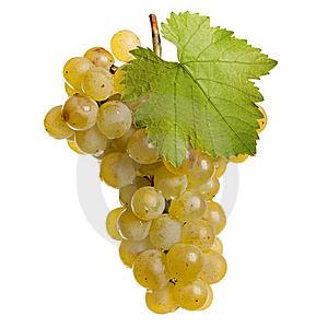 Fresh grapes of white wine