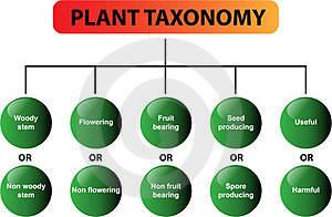 Plant taxonomy diagram - vector