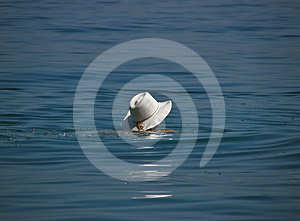 White hat in the sea