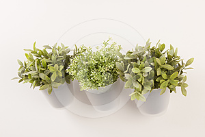 Potted herbs on wall