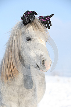 Funny grey pony with glowes in winter