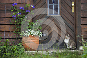 Cat in front of a wooden door