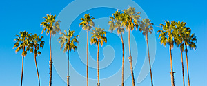 A row of palm trees with a sky blue background