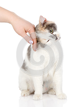 Hand of persons stroking a cat