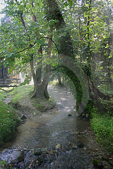 Stream in leafy green forest
