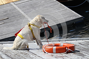 Trained rescue dogs