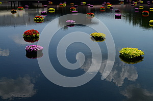 Peaceful flowers on water at Epcot