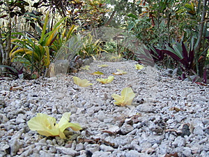 Blossom on a pebble path