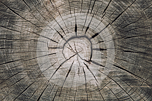 Wood trunk cross section with splits wood and rings concentric circles