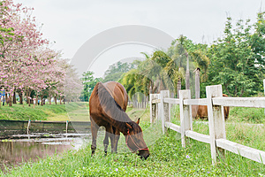 Equine on farm with green grass, landscape view