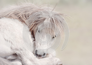 Fairytale Pony