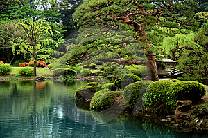 Calm Zen lake and bonzai trees
