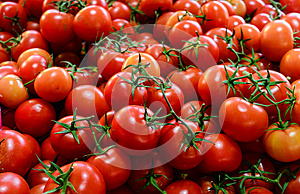 Truss tomatoes for sale