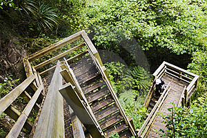 Wood stairway in forest