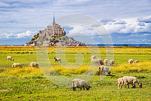 Mont Saint-Michel with sheep grazing, Normandy, France