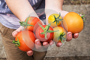 Summer tomatoes