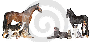 Horses and dogs collage