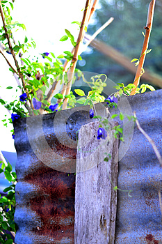 Plant Vegetable Garden/Vegetable on wall/zinc wall