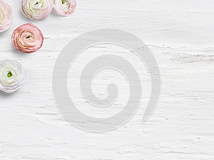 Styled stock photo. Feminine desktop mockup with buttercup flowers, Ranunculus, empty space and shabby white background