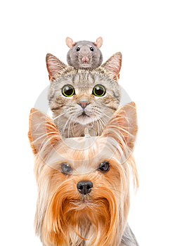 Funny portrait of a dog, a cat and a rat