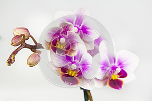 Macro image of orchid flower, captured with a small depth of field.