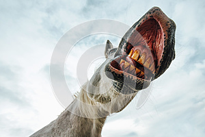 Funny low angle view of grinning horse mouth and teeth