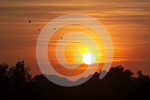 Sunset Landscape with Birds