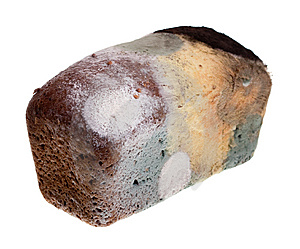 decay of bread How to store bread – savvy eats – all about making and – i love having a local bakery within walking distance we pick up a fresh loaf of bread at the.