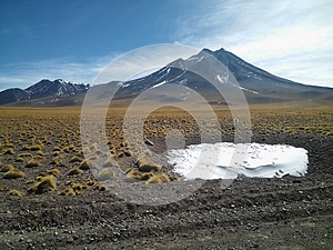 Small amount of ice with grass around, some vicunas and a volcano