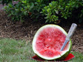 Watermelon Samples Royalty Free Stock Photography