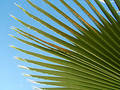 Palm Leaf Royalty Free Stock Photo - 103205