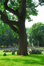Old Cemetery Royalty Free Stock Photo - 1004295