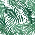 Fern Leaf Vector Fern Leaf Vector Seamless Pattern Background   Royalty Free Stock Photography - 100079057