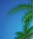 Summer Background With Palm Trees Stock Image - 10023871
