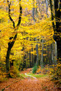 Pathway In Forest Stock Photography - 10033072