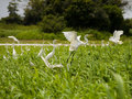 Herons Stock Images - 10036734