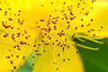 Pollen Royalty Free Stock Images - 10047689