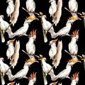 Sky Bird White Macaw Pattern In A Wildlife By Watercolor Style. Stock Images - 100547874