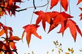 Yellow And Red Leave Stock Image - 100642831