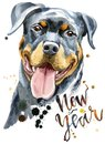 Watercolor Portrait Of Rottweiler Royalty Free Stock Photo - 100828745