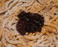 Funnel Cake With Currant Cream . STRAUBEN, Typical Dessert Of South Tyrol, Italy. Royalty Free Stock Photo - 100838245