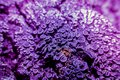 Lichen In Ultraviolet Royalty Free Stock Images - 100866169