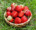 Strawberry In A Basket Royalty Free Stock Image - 10099676