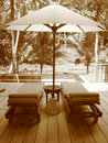 Jungle Lounging Royalty Free Stock Photography - 1018167