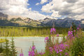 Bow River Royalty Free Stock Images - 1019459