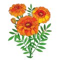 Vector Bouquet With Orange Tagetes Or Marigold Flower, Bud And Green Leaf Isolated On White Background. Ornate Marigold Flowers. Royalty Free Stock Photography - 101099897