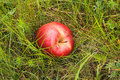 Red Apple Stock Images - 10115614