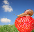 Garden Snail Stock Photos - 10139893