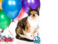 Calico Cat With Balloons And Streamers On White Royalty Free Stock Photos - 10143268