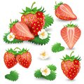 Ripe Strawberry With Leaves And Blossom Vector Set Stock Photography - 101487742